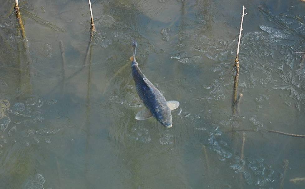 冬至以后的钓鱼技巧 不封竿的来学学啦